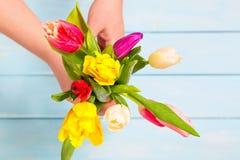 Concept romantique Fermez-vous des fleurs colorées de tulipe dans des mains femelles sur le fond en bois bleu-clair Écoulement co Image libre de droits
