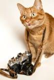 Concept rouge de Cat Photographer Photo libre de droits