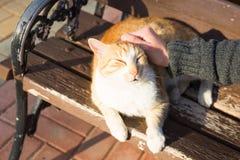 Concept sans abri de chat, d'animal familier et d'animaux - équipez frotter la tête du ` s de chat Images libres de droits