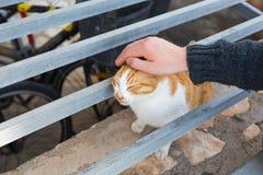 Concept sans abri de chat, d'animal familier et d'animaux - équipez frotter la tête du ` s de chat Photo stock