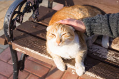Concept sans abri de chat, d'animal familier et d'animaux - équipez frotter la tête du ` s de chat Photos stock