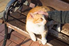 Concept sans abri de chat, d'animal familier et d'animaux - équipez le chef de caresse du ` s de chat Images libres de droits