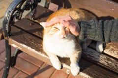 Concept sans abri de chat, d'animal familier et d'animaux - équipez le chef de caresse du ` s de chat Image stock