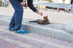 Concept sans abri de chat, d'animal familier et d'animaux - équipez les chats de rue de caresse Photographie stock