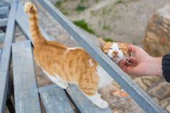 Concept sans abri de chat, d'animal familier et d'animaux - équipez les chats de rue de caresse Image libre de droits