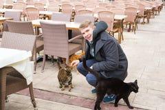 Concept sans abri de chat, d'animal familier et d'animaux - équipez les chats de rue de caresse Photos libres de droits