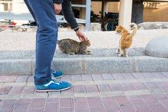Concept sans abri de chat, d'animal familier et d'animaux - équipez frotter la tête du ` s de chat Photos libres de droits