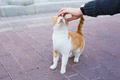 Concept sans abri de chat, d'animal familier et d'animaux - équipez frotter la tête du ` s de chat Photographie stock