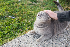 Concept sans abri de chat, d'animal familier et d'animaux - équipez frotter la tête du ` s de chat Images stock