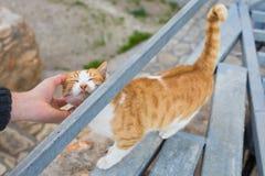Concept sans abri de chat, d'animal familier et d'animaux - équipez frotter le chat Image stock