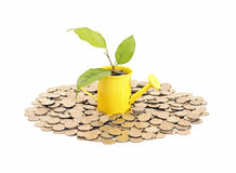 Concept of savings and money tree Royalty Free Stock Photography
