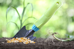 Concept of seeding, corn seeds and garden tool on soil Royalty Free Stock Images