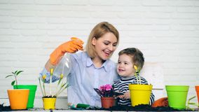 Concept of seedlings. Mother and son have fun with watering the summer flowers. Concept of seedlings. Mother and son have fun with watering the summer flowers stock video
