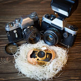 Concept SLR cameras and small compact as family in nest Royalty Free Stock Photo