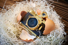 Concept small compact photo camera as baby in nest Stock Photo