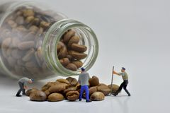 Concept, Sorting coffee beans. Concept, Small Workers Working With Coffee Beans, Sorting coffee beans Royalty Free Stock Image