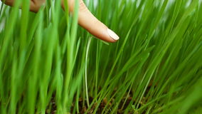 Concept social de discrimination : Lame blanche parmi l'herbe verte (enlevant les mauvaises herbes non désirées) La suppression d banque de vidéos