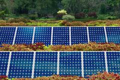 Concept of Solar panel garden. And green environment Stock Images