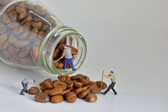 Concept, Sorting coffee beans. Concept, Small Workers Working With Coffee Beans, Sorting coffee beans Royalty Free Stock Images