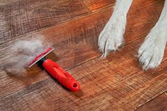 Concept spring annual molt dog. Red rakers brush with wool pet lies on floor next to dog`s paws. Closeup. stock photography