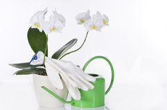 Concept still life with white orchid, gloves Royalty Free Stock Image