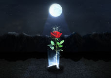 Concept of strong. Magic Rose escapes from the soil on the mountains background below moonlight at night. Concept of life Royalty Free Stock Images