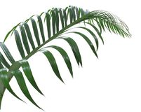 Concept summer with green palm leaf from tropical . frond floral Royalty Free Stock Photo