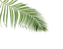 Concept summer with green palm leaf from tropical . frond floral. Leaves branches tree isolated on white pattern background. flat lay, top view royalty free stock photos