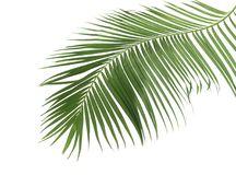 Concept summer with green palm leaf from tropical . frond floral Royalty Free Stock Photography