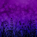 Concept Summer. Night sky, blur, field grass. Concept Summer. Night sky, blur silhouettes field grass Stock Photos