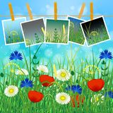 Concept Summer. Sky, blur, field grass. Concept Summer. Sky, blur, meadow with herbs and flowers. Summer photos on clothespins on a rope. You can insert your Stock Photo