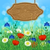 Concept Summer. Sky, blur, field grass. Concept Summer. Sky, blur, meadow with herbs and flowers. Wooden signboard for text Stock Images