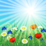 Concept Summer Solstice. Sky, blur, field grass, flower, sun, the lights of a sun. Rest vacation, in nature, in forest, on a country house in countryside. 21 Royalty Free Stock Photography