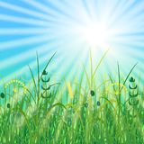 Concept Summer Solstice. Sky, blur, field grass, sun, the lights of a sun. Rest vacation, in nature, in forest, on a country house in countryside. 21 June Royalty Free Stock Images