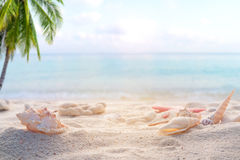 Concept of summertime on beach Stock Photo