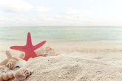 Concept of summertime on tropical beach. Seaside summer beach with starfish, shells, coral on sandbar and blur sea background. vintage color tone Royalty Free Stock Images