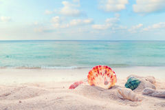 Concept of summertime on tropical beach. Seaside summer beach with starfish, shells, coral on sandbar and blur sea background. vintage color tone stock photos
