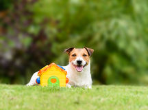 Concept of sweet home and family house with dog and baby toy. Dog lying near toy house on a green grass lawn Royalty Free Stock Image