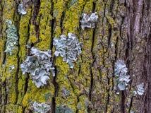 Concept symbiotique d'association détaillé en nature photo stock