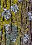 Concept symbiotique d'association détaillé en nature images libres de droits