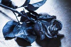 Concept, symbol of sorrow, melancholy and sad mood. Depression and love. Black Rose. Concept, symbol of sorrow, melancholy and sad mood. Depression, farewell stock image