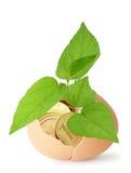 Concept symbolizing financial increase Royalty Free Stock Photo
