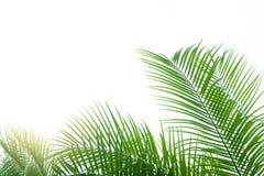 Green leaf background, nature background concept