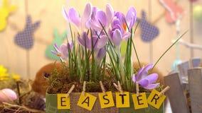 Concept traditionnel de symbole de lapin de célébration pelucheuse de Pâques derrière le pot de fleur banque de vidéos
