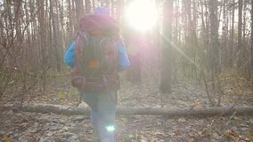 Concept of winter, autumn travel and hiking. Young hiker woman hiking outside in a autumn forest. Concept of travel and hiking. Young hiker woman hiking outside stock video