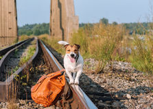 Concept of traveling with a pet: dog balancing on train track rail. Dog standing near leather backpack Royalty Free Stock Photo
