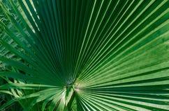 Concept tropical minimal feuilles de plan rapproché de palma photographie stock