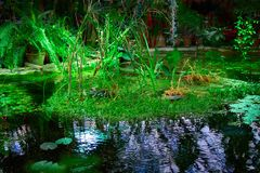 Concept of unspoilt nature, ecology. Sunlight on the plants in the pond. Romantic solitude in nature. Play of light and shadow. Copy space Royalty Free Stock Image