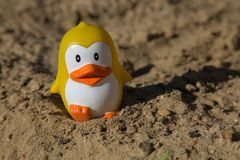 Concept vacations beach penguin toy sand Stock Image