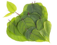 Concept van het aard het groene hart Royalty-vrije Stock Foto's
